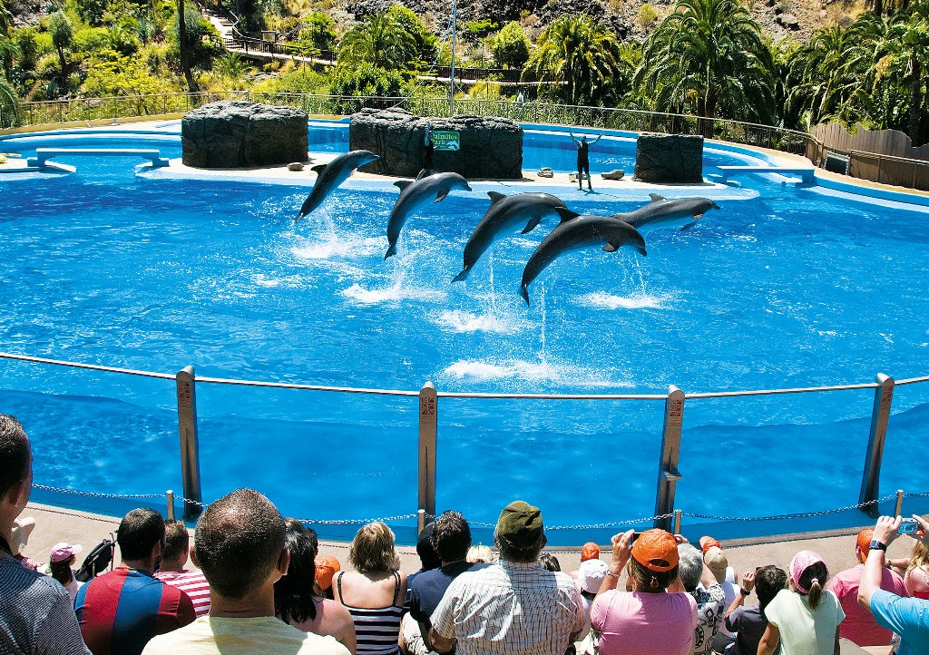 Дельфинарий в Пальмитос парке на Гран Канарии