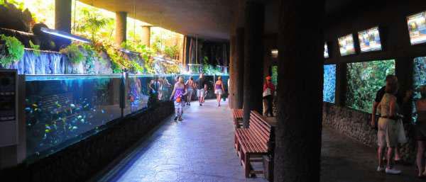 Аквариум в Пальмитос парке на Гран Канарии