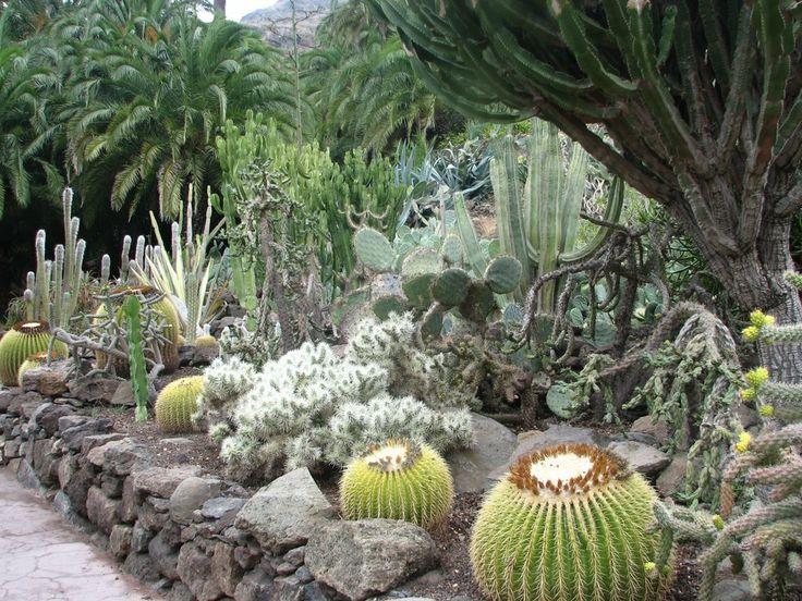 Кактусы в Пальмитос парке на Гран Канарии