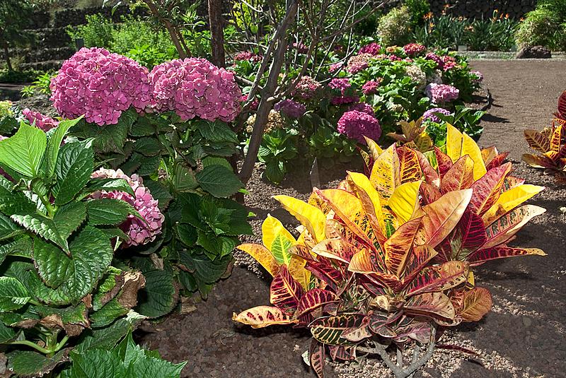 Ядовитый сад Гуимар на Тенерифе, Канарские острова